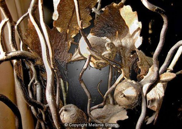 304873_acorn-leaves